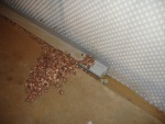 Floor_Wall_Drainage_Channel.JPG_28052010-1246-58